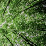 Trees - Sustainability